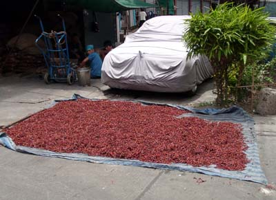 Chili peppers drying in the sun