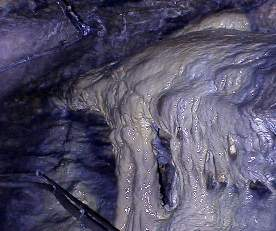The alligator in the cave