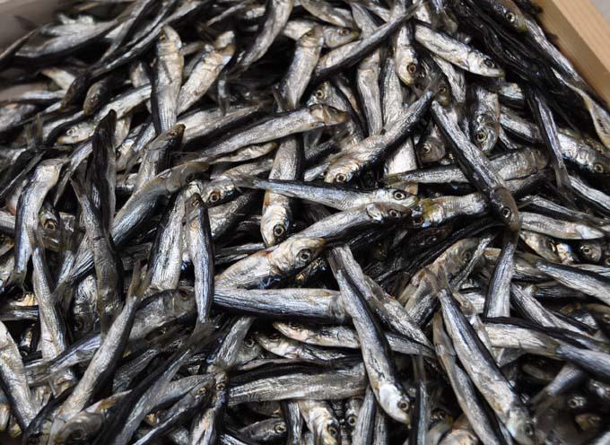 Tsukiji Market Fish