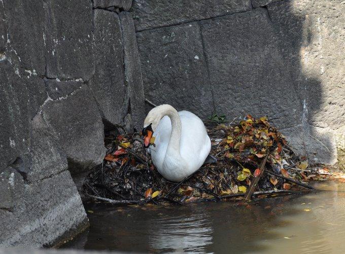 Swan building her next in Tokyo