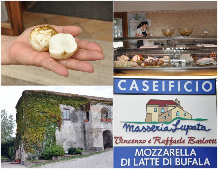 Making buffalo mozzarella at Barlotti