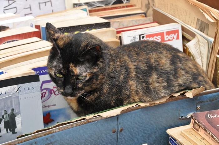 Cat in Istanbul-Books