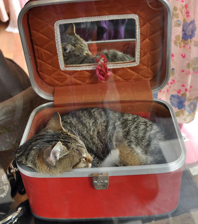 Cat in Istanbul-Trunk