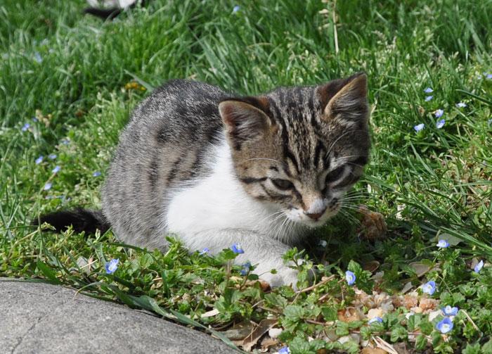 Kitten in Istanbul
