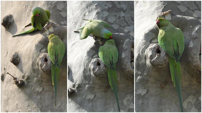Topkapi Palace parrots