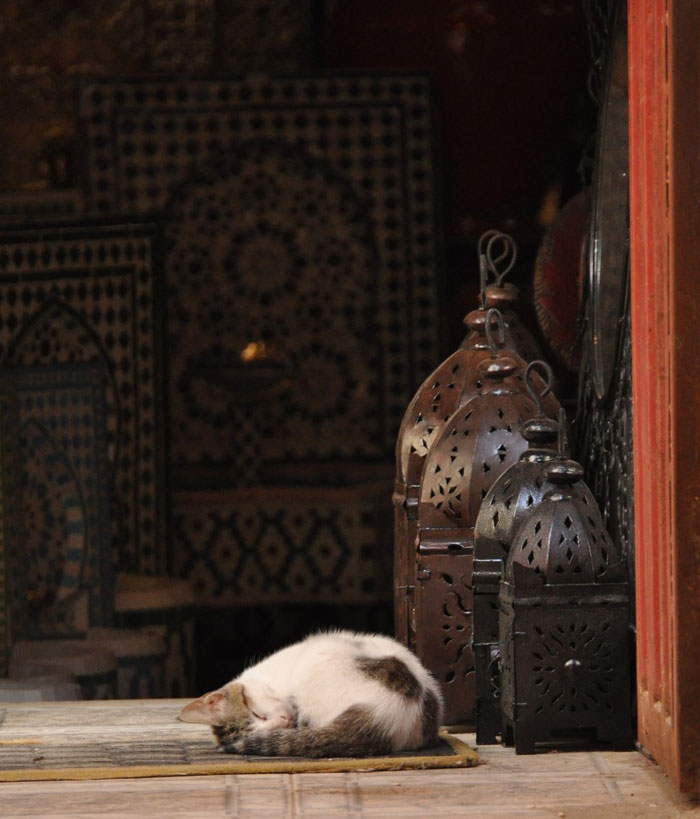 Post image for The Cats of Morocco