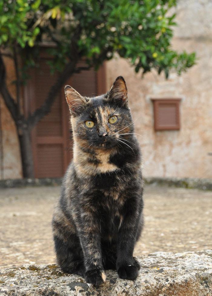 Masseria Salamina Cat Julietta