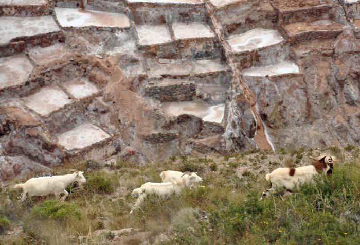 Maras Salt Pans, Peru