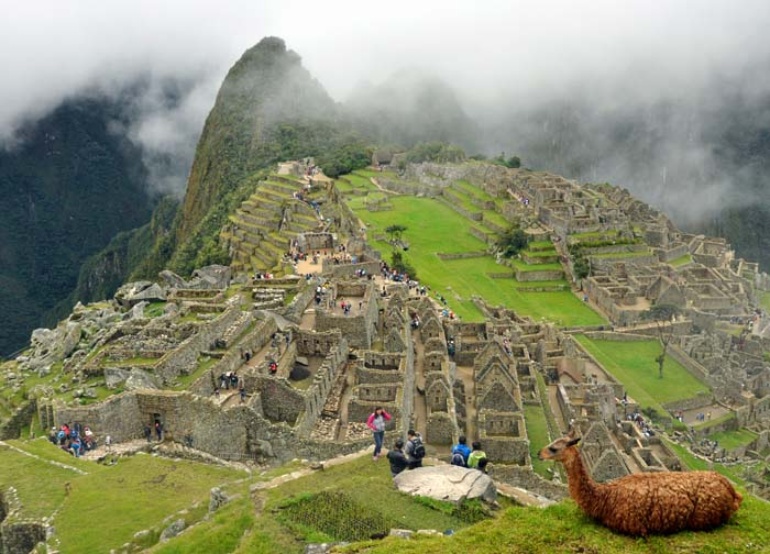 View of Machu Picchu and Llama on www.wired2theworld.com