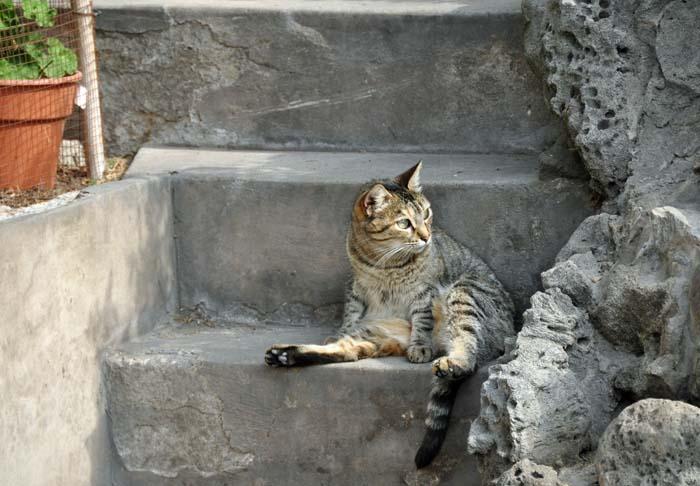 Lima Cats