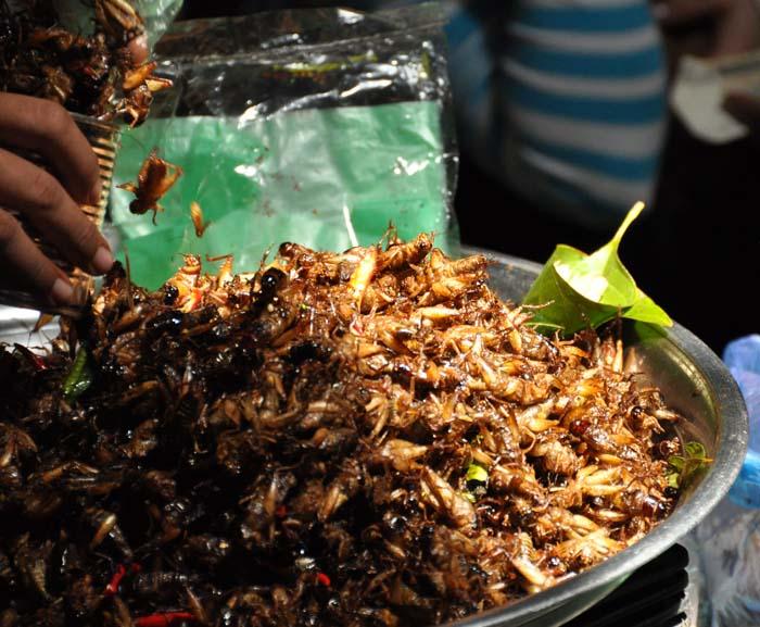 Siem Reap Old Market bugs
