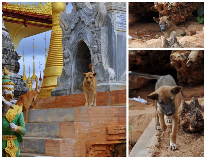 Dogs at In Dien Pagoda