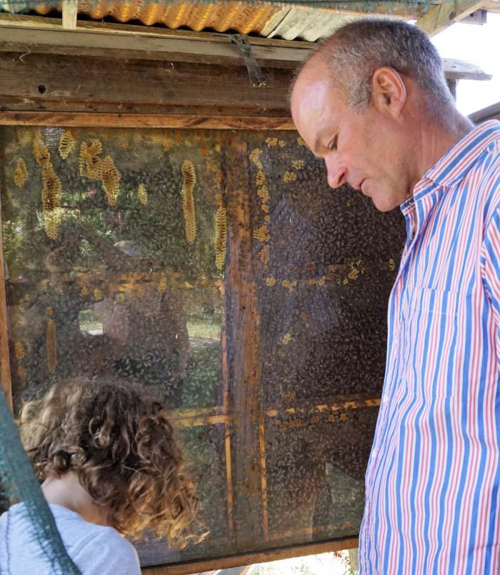Bees at Il Casale Farm