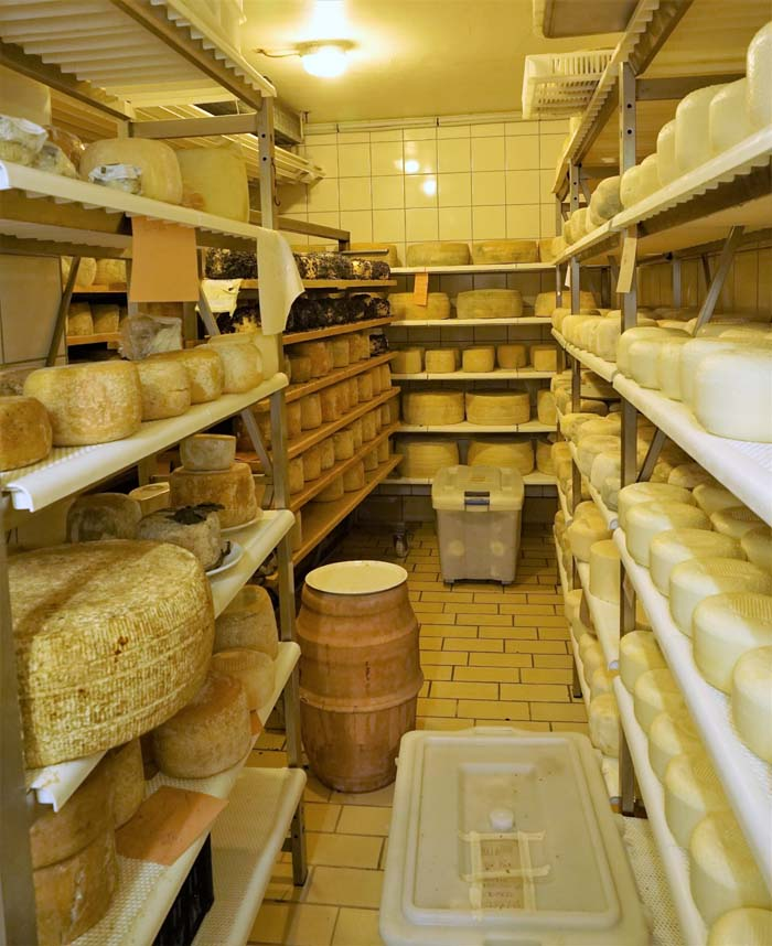 Cheese aging room at Il Casale Farm
