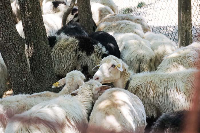 Il Casale Farm